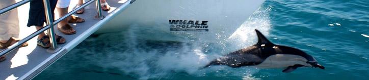 Auckland\'s Whale & Dolphin Safari, Expore NZ